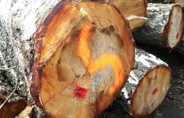 2. Marcare forestiera
